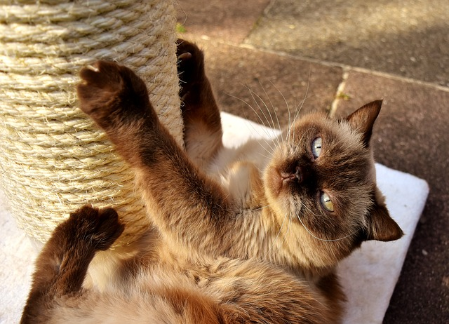Warum Katzen kratzen