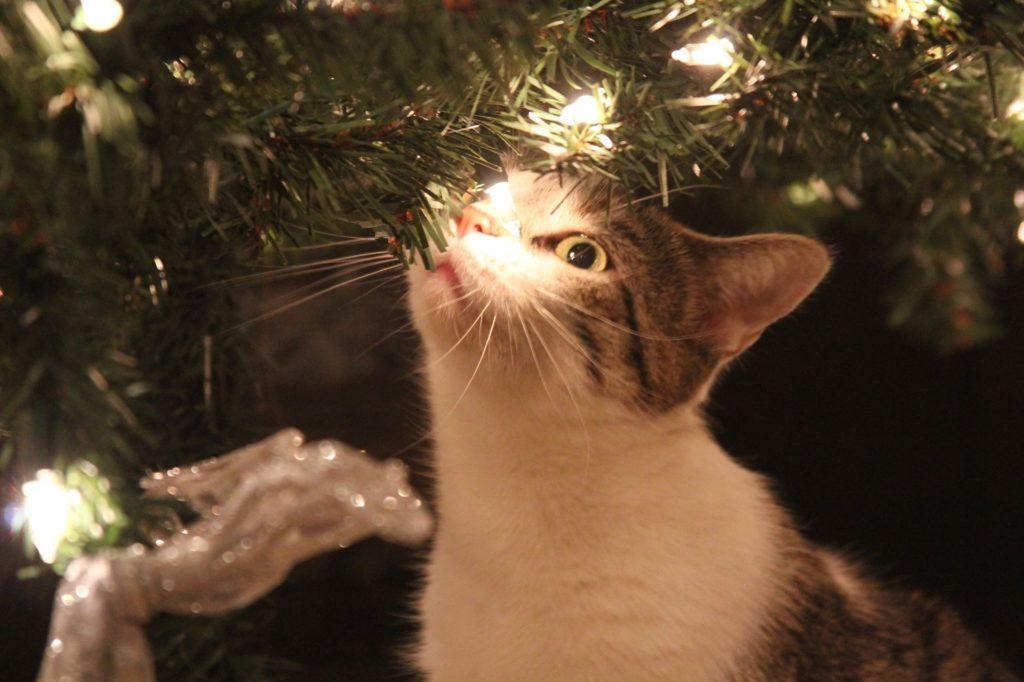 Katze unterm Weihnachtsbaum