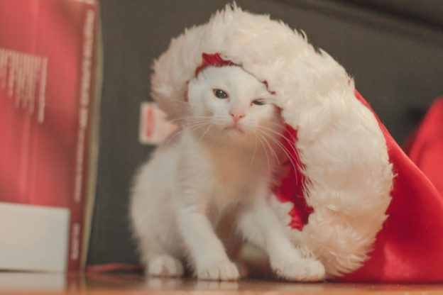 Weihnachtliche Katzenspielchen